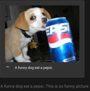 Eat A: A funny dog eat a pepsi.  A funny dog eat a pepsi..This is so funny picture