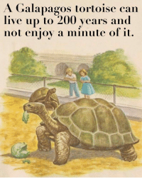 Bailey Jay, Live, and Dank Memes: A Galapagos tortoise can  live up to 200 years and  not enioy a minute of it. That's a big fella