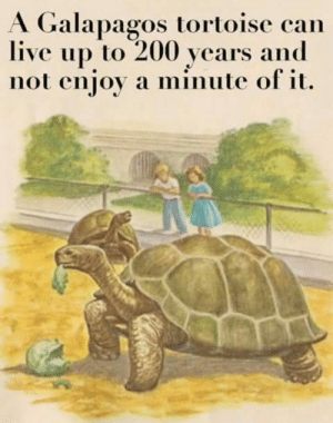200: A Galapagos tortoise can  live up to 200 years and  not enjoy a minute of it.