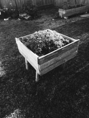 Black, Black and White, and White: A garden bed in black and white