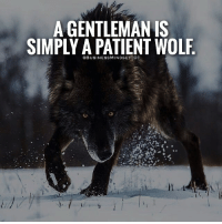 A GENTLEMAN IS  SIMPLY A PATIENT WOLF  BUSINESS MINDSET O 1 🔥Tag a wolf. - Follow 👉 @theclassygentleman