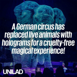 This circus uses holograms instead of living animals for a cruelty-free, yet magical experience! 🐘🎪: A Germancircushas  replaced live animals with  holograms for a cruelty-free  magicalexperience!  UNILAD This circus uses holograms instead of living animals for a cruelty-free, yet magical experience! 🐘🎪