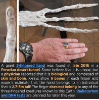 Bones, Creepy, and Memes: A giant 3-fingered hand  was found in late 2016 in a  Peruvian desert tunnel. Some believe that it is a hoax, but  a physician reported that it is biological and composed of  skin and bone. X-rays show 6 bones in each finger and  experts estimate that the hand belongs to an individual  that is 2.7-3m tall! The finger does not belong to any of the  three-fingered creatures known to this Earth  Radiocarbon  and DNA tests are planned for later this year. I wonder what species this thing is hm -R • • • • • • • • • • • • • • • • • • • • • • • • • • • • ----------------------------------------- -------------------- horrorstories horrorstory horrorfacts horrorfact creepypasta unknownfact horrorstories horrorstory horrorfacts horrorfact creepypasta unknownu horrifyingthing things scary scarystories creepystories creepy creepyfacts creepyfact scaryfacts scaryfact horrorstories horrorstory horrorfacts horrorfact creepypasta unknownfact horrorstories horrorstory horrorfacts horrorfact creepypasta unknownu horrifyingthing things conspiracy theories theory theoryconspiracy conspiracytheory conspiracytheories