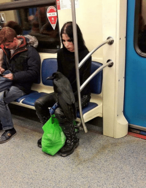 A girl and her raven on the running subway ….: A girl and her raven on the running subway ….