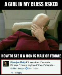 "Memes, Girl, and How To: A GIRL IN MY CLASS ASKED  HOW TO SEE IF A LION IS MALE OR FEMALE  Dipanjan Maity If it roars then it's a male...  If it says i have a boyfriend"" then it's female....  Unlike Reply35 14 hrs  1 Reply Epic :p"