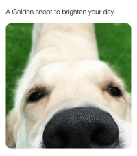 Memes, Butterfly, and 🤖: A Golden snoot to brighten your day (@x__social_butterfly__x) posts the cutest memes on IG!