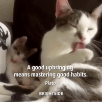 Memes, Good, and Masters: A good upbringing  means mastering good habits.  Plato  BRIGHT SIDE