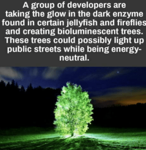 Energy, Streets, and Trees: A group of developers are  taking the glow in the dark enzyme  found in certain jellyfish and fireflie:s  and creating bioluminescent trees.  These trees could possibly light up  public streets while being energy-  neutral. Mind blown
