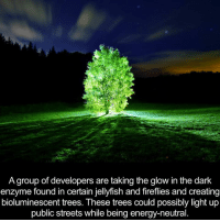 enzymes: A group of developers are taking the glow in the dark  enzyme found in certain jellyfish and fireflies and creating  bioluminescent trees. These trees could possibly light up  public streets while being energy-neutral.