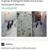 Memes, Tumblr, and Denmark: A group of penguins broke out of a zoo  enclosure in Denmark  trib.al/ijBgEMB  stability.tumblr.com  stability  smile and wave boys, smile and wave Kowalski, analysis (STOLEN FROM r/memes)