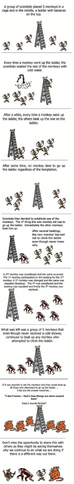 "I Bet, Shower, and Monkey: A group of scientists placed 5 monkeys in a  cage and in the middle, a ladder with bananas  on the top.  Every time a monkey went up the ladder, the  scientists soaked the rest of the monkeys with  cold water.  After a while, every time a monkey went up  the ladder, the others beat up the one on the  ladder.  After some time, no monkey dare to go up  the ladder regardless of the temptation.  Scientists then decided to substitute one of the  monkeys. The 1st thing this new monkey did was to  go up the ladder. Immediately the other monkeys  beat him up.  After several beatings,  the new member learned  not to climb the ladder  even though never knew  why  A 2nd monkey was substituted and the same occurred.  The 1st monkey participated on the beating for the 2nd  monkey. A 3rd monkey was changed and the same was  repeated (beating). The 4h was substituted and the  beating was repeated and finally the 5th monkey was  replaced.  What was left was a group of 5 monkeys that  even though never received a cold shower,  continued to beat up any monkey who  attempted to climb the ladder.  If it was possible to ask the monkeys why they would beat up  all those who attempted to go up the ladder....  I bet you the answer would be...  ""I don't know-that's how things are done around  here""  Does it sounds familiar?  Don't miss the opportunity to share this with  others as they might be asking themselves  why we continue to do what we are doing if  there is a different way out there. Curious Monkey Experiment: are you a blind follower?"