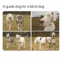 <p>Guide dog dog</p>: A guide dog for a blind dog <p>Guide dog dog</p>