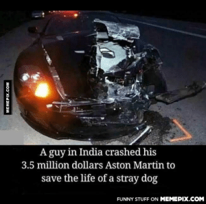 All lives matteromg-humor.tumblr.com: A guy in India crashed his  3.5 million dollars Aston Martin to  save the life of a stray dog  FUNNY STUFF ON MEMEPIX.COM  MEMEPIX.COM All lives matteromg-humor.tumblr.com