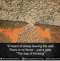 """stalling: """"A heard of sheep leaving the stall.  There is no fence just a gate  """"The trap of thinking""""  f @AmazingThingofficial  @Amazing. Beautiful. Things  Trending Posts"""