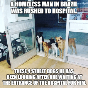 Animals, Dogs, and Funny: A HOMELESS MAN IN BRAZIl  WAS RUSHED TO HOSPITALS  AS  A PRECO DE CUSTO  的1  THESE4 STREET DOGS HE HAS  BEEN LOOKING AFTERAREWAITINGAT  THE ENTRANCE OF THE HOSPITAL FORHIM 33 Happiest Dog Memes Ever That Will Make You Smile From Ear To Ear #dogmemesfunny #dogmemes #dog #memesdaily #memes #funny #funnymemes #lovelyanimalsworld - Lovely Animals World