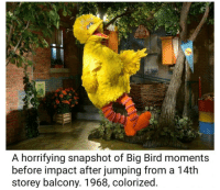 snapshot: A horrifying snapshot of Big Bird moments  before impact after jumping from a 14th  storey balcony. 1968, colorized