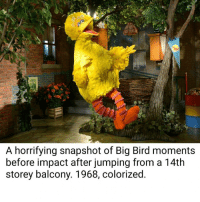 Big Bird: A horrifying snapshot of Big Bird moments  before impact after jumping from a 14th  storey balcony. 1968, colorized