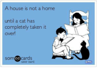 Memes, Taken, and Best Cat: A house is not a home  until a cat has  completely taken it  over  Som ee  cards  user card  Omes Yep, even now I am under strict cat orders to share this from The Best Cat Page