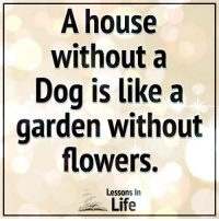 Life, Memes, and Flowers: A house  without a  Dog is Like a  garden without  flowers.  Lessons In  Life Lessons In Life <3