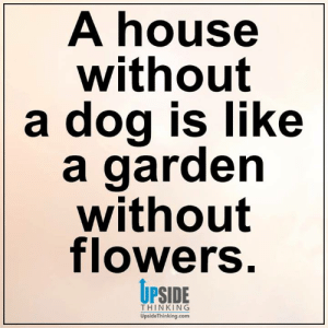 House Without