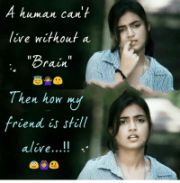 """Memes, Brain, and Live: A human can'  live without a  """"Brain""""  Then how my  riend is sfill  otcs  alire... !."""
