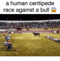 This is insane! 😱 thoughts? 🐂🐃🤔 @pmwhiphop: a human centipede  race against a bull This is insane! 😱 thoughts? 🐂🐃🤔 @pmwhiphop