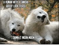 moon moon: A HUMAN WITH A CAMERA  QUICK! LOOK FIERCE  DAMNIT MOON MOON  oxys