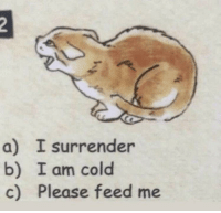 Napoleon after his failed invasion of Russia in the winter (1812, colorized): a) I surrender  b) I am cold  c) Please feed me Napoleon after his failed invasion of Russia in the winter (1812, colorized)