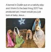 Jesus: A kennel in Dublin put on a nativity play  and l think it's the best thing 2017 has  produced yet. I mean would you just  look at baby Jesus... Jesus
