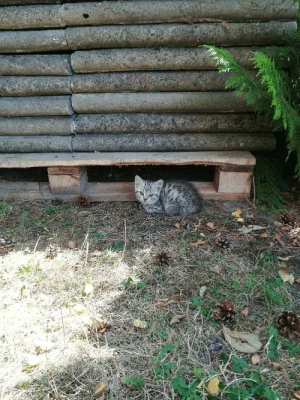 A kitten we wound in my uncle's garden: A kitten we wound in my uncle's garden
