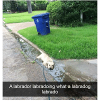 Memes, Yeah, and 🤖: A labrador labradoing what a labradog  labrado Yeah that seems about correct | @cuteandfuzzybunch