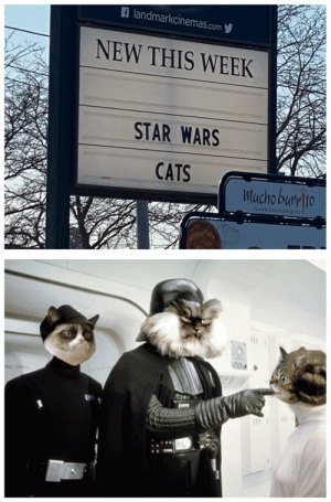 Star Wars Cats: A landmarkcinemas.com y  NEW THIS WEEK  STAR WARS  CATS  Mucho bumlto  trech mexican grill  004 Star Wars Cats