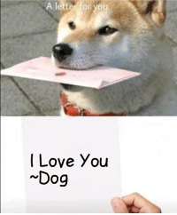 To My Master: A letter for you  I Love You  Dog To My Master