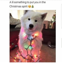 Christmas, Spirit, and Girl Memes: A lil something to put you in the  Christmas spirit Deck those halls