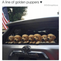 "Memes, Dawn, and Pull Out: A line of golden puppers  Dr Smashlove When your pull-out game atrocious but it's ok because u make beautiful babies so u populate the earth with mini-me's but then yo baby mama's only come around when it's payday and it dawns on u that u have been used for your good genes, pleasant features and wealth and so u reflect on the times u didn't pull out and ponder whether or not it was worth it and then u recall that there is nothing on God's green earth more wondrous than busting deep inside the velvety soft four walls of some Grade A Punani and u grin and rub the heads of your chirren and say ""go head chirren, I love y'all. There is no mathematical way I can afford private tuition for all 14 of y'all but every last one of you were WORTH IT"" EighteenSeconds TurnedToEighteenYears WorthIt AF 😍😂😂😂 [Editor's Note: I can't believe some of y'all are asking if I actually have 14 chirren. NO. JESUS CHRIST 😫. Y'all are a trip I swear I love y'all 😂.]"
