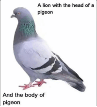 a god amongst men: A lion with the head of a  pigeon  And the body of  pigeon a god amongst men