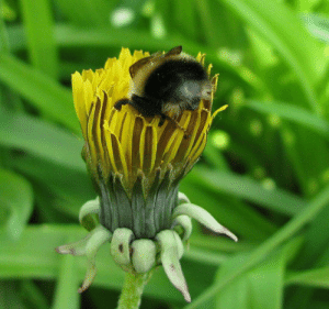 A little bee butt hanging out of a flower
