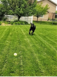 Run, First, and Yard: A little bit late, but that first real yard run