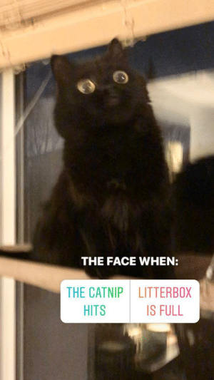 A little blurry, but still the best picture of my cat ever.: A little blurry, but still the best picture of my cat ever.