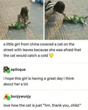 "I hope shes having a great day: a little girl from china covered a cat on the  street with leaves because she was afraid that  the cat would catch a cold  epiloque  i hope this girl is having a great dayi think  about her a lot  bunjywunjy  love how the cat is just ""hm. thank you, child."" I hope shes having a great day"