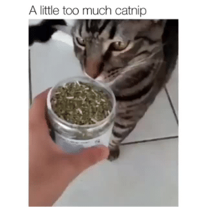 Target, Too Much, and Tumblr: A little too much catnip justcatposts:hahaha
