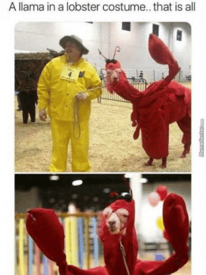 Memes, Happy, and Http: A llama in a lobster costume.. that is all  MemeCenter.com happy national lobster day everyone via /r/memes http://bit.ly/2KjkUtJ