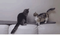 Fight, Cat, and Arm: A longer arm could decide a vital cat fight! https://t.co/WQPqQHxwzM