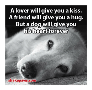 Memes, Forever, and Heart: A lover will give you a kiss.  A friend will give you a hug.  But a dog will give you  his heart forever  shakepaws.com ❤️