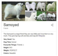 Beautiful, Friends, and Love: a  -M ore images  Samoyed  Friend  The Samoyed is a large friend they are very fluffy and I love them so very  much. They give big hug soft and kiss and wag tail Wikipedia  Very Good: Yes  Hug Time: forever  Favourite Things: Friends :)  Height: BIG  Weight: PERFECT  Colors: Beautiful