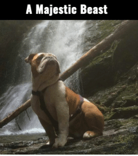 Dank, 🤖, and Dog: A Majestic Beast This dog really knows how to strike a pose!
