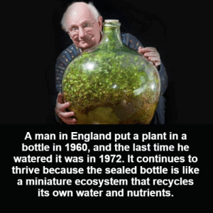 England, Memes, and Time: A man in England put a plant in a  bottle in 1960, and the last time he  watered it was in 1972. It continues to  thrive because the sealed bottle is like  a miniature ecosystem that recycles  its own water and nutrients.