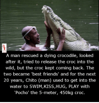 "Memes, 🤖, and Into the Wild: A man rescued a dying crocodile, looked  after it, tried to release the croc into the  wild, but the croc kept coming back. The  two became best friends' and for the next  20 years, Chito (man) used to get into the  water to SWIM,KISS,HUG, PLAY with  ""Pocho' the 5-meter, 450kg croc."