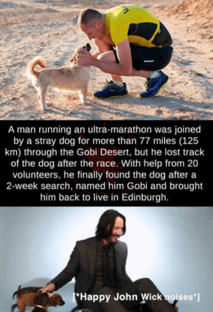 Restores my hope in humanity by thegoodmeme MORE MEMES: A man running an ultra-marathon was joined  by a stray dog for more than 77 miles (125  km) through the Gobi Desert, but he lost track  of the dog after the race. With help from 20  volunteers, he finally found the dog after a  2-week search, named him Gobi and brought  him back to live in Edinburgh.  Happy John Wick noises' Restores my hope in humanity by thegoodmeme MORE MEMES