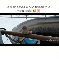 Aww, Frozen, and Memes: a man saves a bird frozen to a  metal pole  @randomturtle aww 😢 (credit: Nelson Wilson)